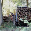ramassage du bois 1