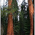 Séquoia park (californie)