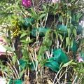les orchidées sont attachée sur les troncs