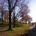 Mont royal 21oct 067