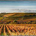 Les 18 meilleurs sancerre selon terre de vins