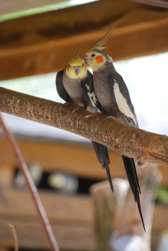 paugre oiseaux