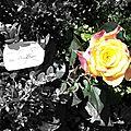 Et rose, elle vécut ce que vivent les roses, l'espace d'un matin...
