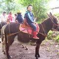 Les ânes de Vassivière Juin 2007