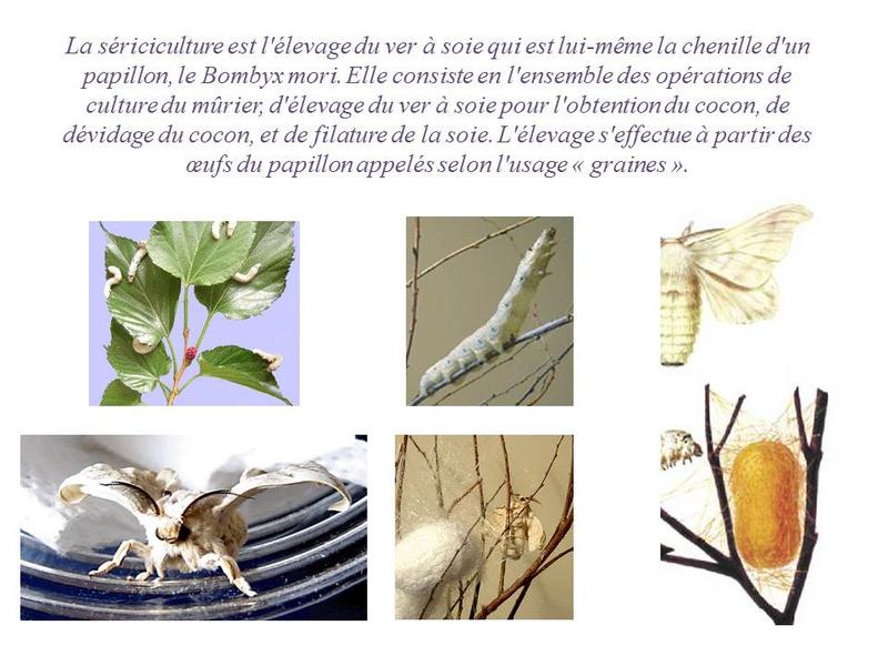 Musée de la soie Taulignan 1 (1)