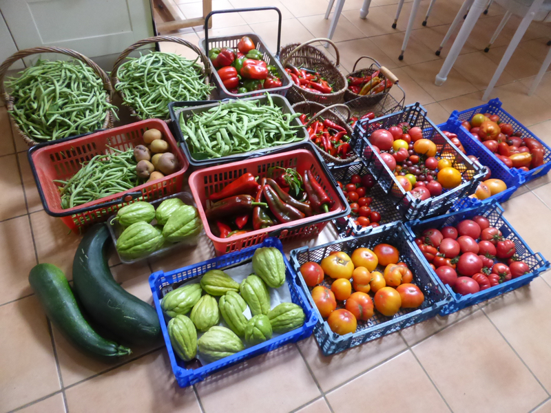 13-haricots, poivrons, piments, chayottes, tomates, courgettes (1)