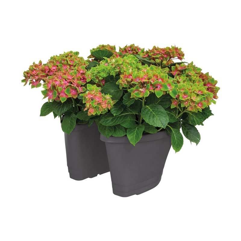 corsica+door+stopper+anthracite+with+hortensia+pot+plant+combination