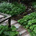 2009 06 24 Végétation au bord d'un ruisseau au Mont Dore (5)