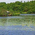 Lac 1505162