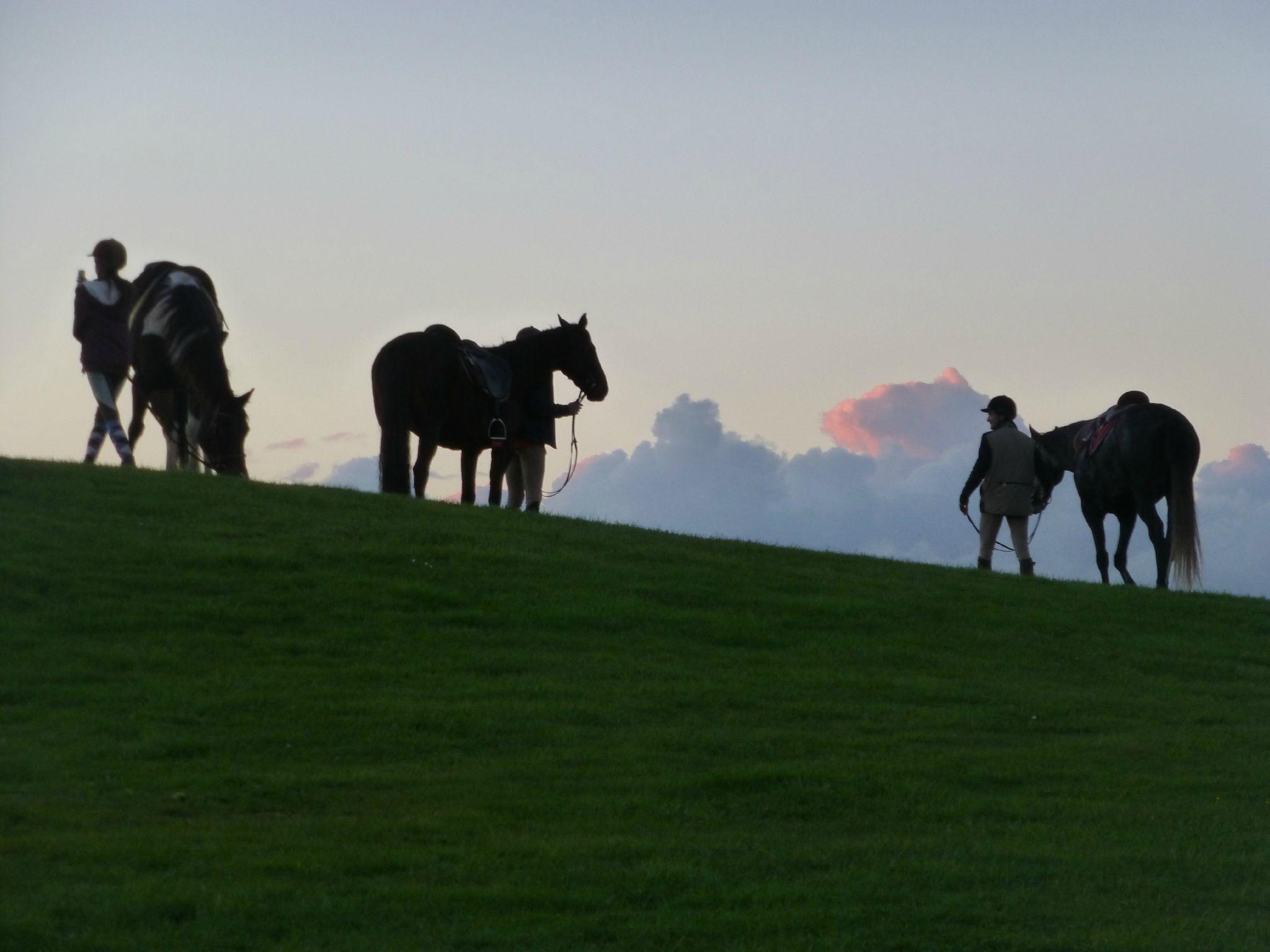 balade liberté - Mesnil Ozenne à cheval (59)