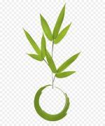 kisspng-madrid-kokedama-plant-floral-design-flowerpot-zoom-5ac1bb2a3a1502_3185655615226458022379