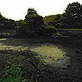 Compte-rendu : ornithologie et découverte de la nature au marais d'itteville