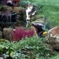 Cette semaine dans le jardin