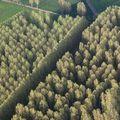 tranches d'arbres