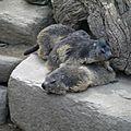 05 Les Marmottes (48)