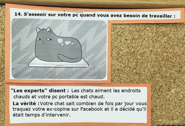 affiches-comportements-chats-14