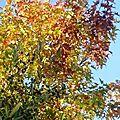 olivier (1)