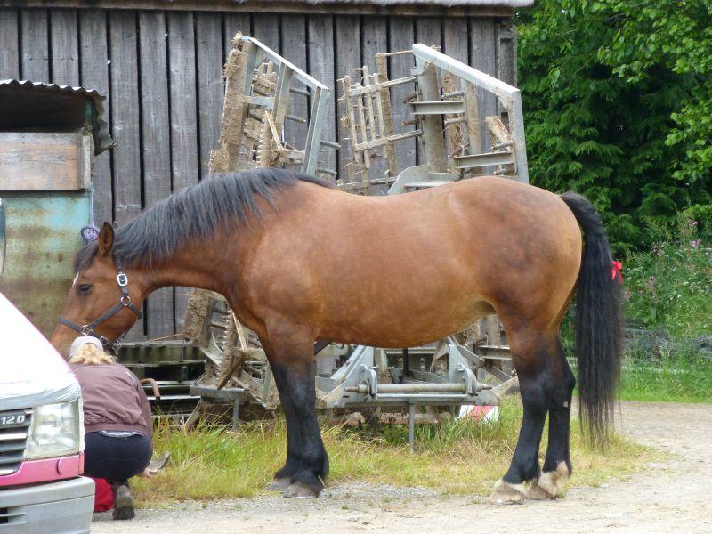 balade equestre gastronomique à La Lucerne d'Outremer (2)