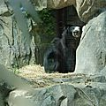Smithsonian national park - ZOO (6)