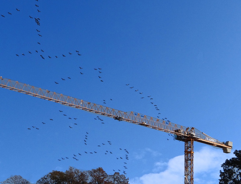 Des grues copie 2