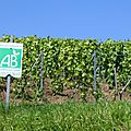 Formations en viticulture bio