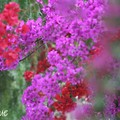 Des fleurs du marocs...