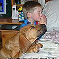 funny-dog-pictures-praying-dog-boy-bed