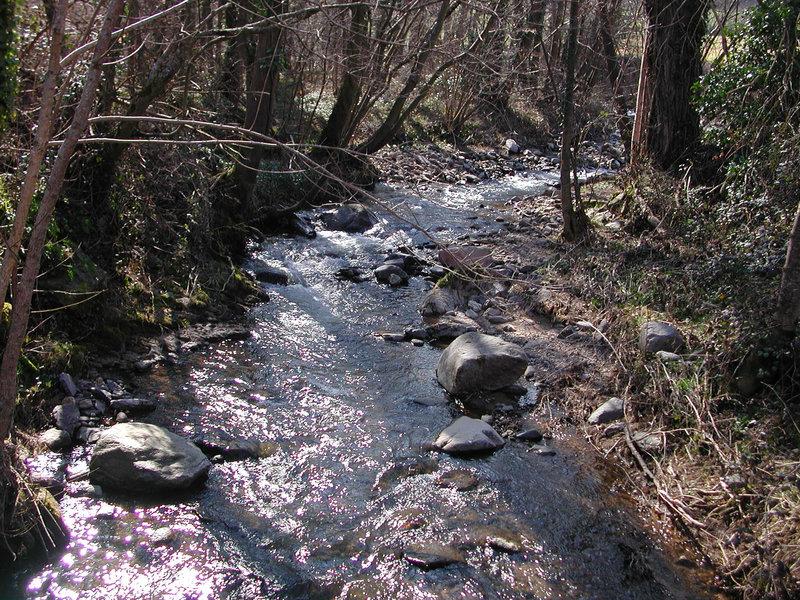 Dscn3583 ruisseau le Couzon lumineux B