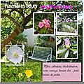* quelques fleurs du jardin suite défis alinamaria_dcs_album de vacances