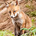 2014-05-30 LUX-0972