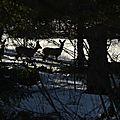 Ces ombres des bois qui nous regardent passer