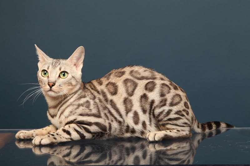 ICE CLOUD BENGAL FR