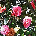 Fleurs de Léon 220219