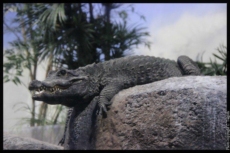 Copenhague : la planète bleue a des crocs