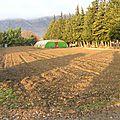 1ère préparation du sol avant implantation des tunnels