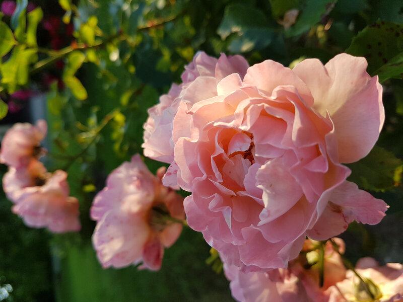 rose marie curie (3)