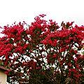1-Fleurs et arbres fleuris de Léon 230717