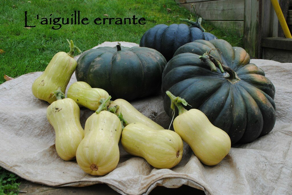 courges