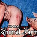 the-dark-side-of-porn-the-real-animal-farm_mp4_snapshot_44_03_149