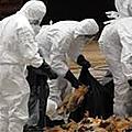 Etat des lieux de la filière avicole au cameroun après la grippe aviaire