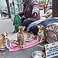 Paris, la ville, les gens