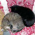 La journée d'une chatte nommée vanda