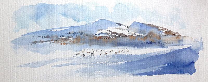 Le troupeau de rennes w20x50 0318