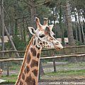 04/08/16 : le zoo d'arcachon # 1