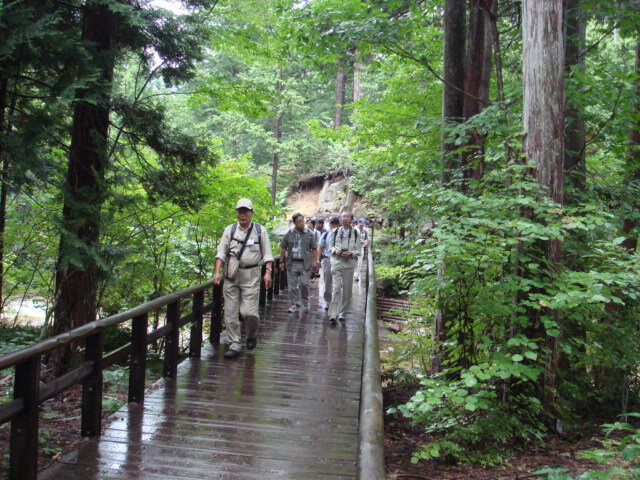 forest-bathing-a-japanese-cypress-forest