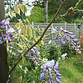 IMG_1849a