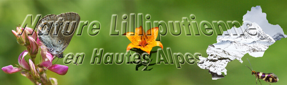 Bandeau_blog_H_Alpes2_copie