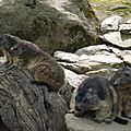 05 Les Marmottes (75)