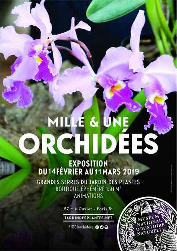 Mille-et-une-orchidées-2019