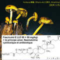 Hypholoma fasciculare_1993_1025 tox
